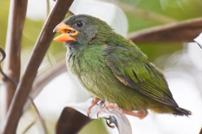 green bird 2